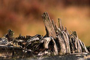 Wood @ Noorderheide van