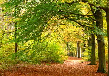 Herfstkleuren in het bos van