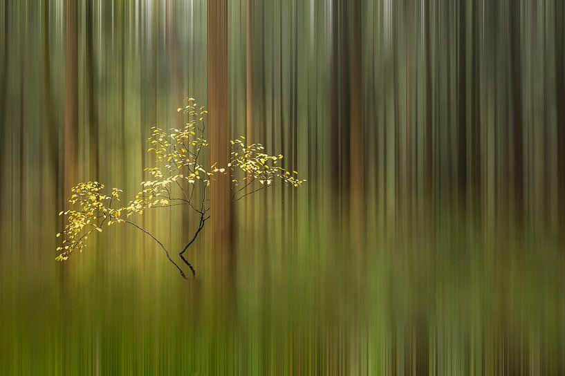 Art of Nature van Piet Haaksma
