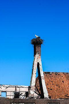 Nest Schornsteinstorch von Berber Velthuis