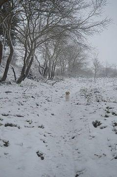 Hund im Schnee von Inge Schoonenberg