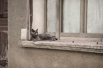Relax von Elles Rijsdijk