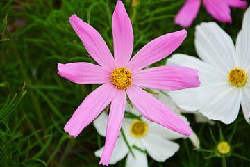 lila bloem van Gerrit Neuteboom