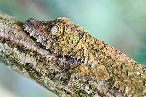 Close up camouflage van Dennis van de Water