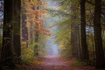 Herbst in den friesischen Wäldern des Gaasterlandes von Michel Seelen