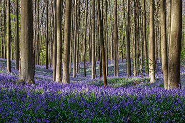 Haller forest von Menno Schaefer