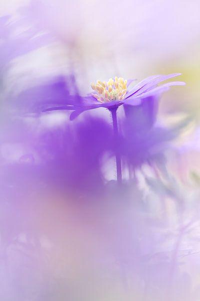The flower that fades van Bob Daalder