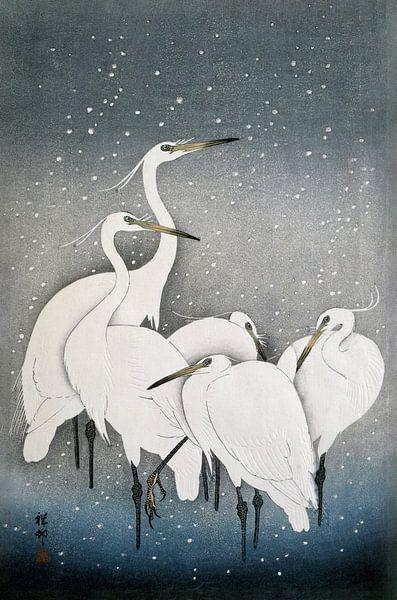 Kraanvogels, een oude Japanse meester in prachtige kleuren van Affect Fotografie