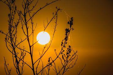 Sonnenuntergang zwischen den Zweigen von Stedom Fotografie