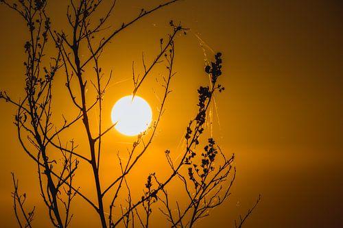 Zonsondergang tussen de takken door