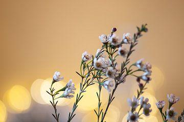 petites fleurs sur Tania Perneel
