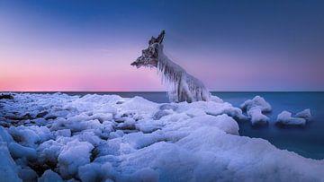 Winter aan de Oostzee van Fine Art Fotografie
