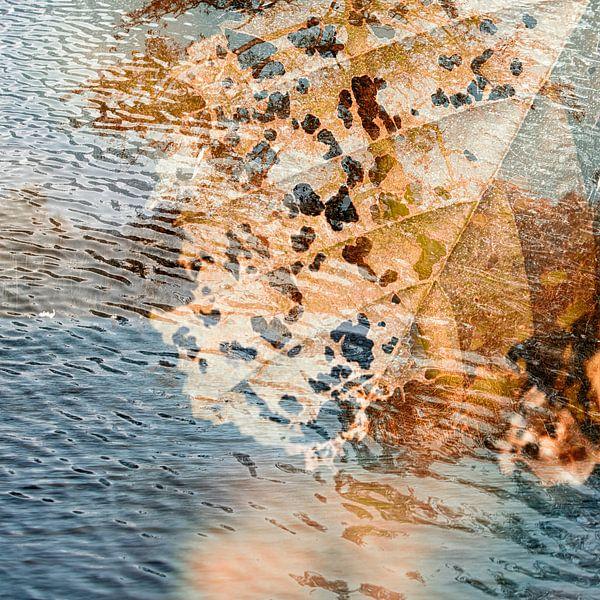 Waterleaf van Leo Drughorn