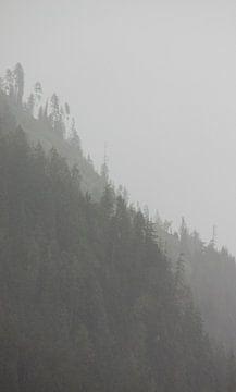 Bergwald im Nebel von Steven Langewouters