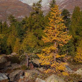 Bos en Triftdal, Zermatt, Wallis, Zwitserland van Torsten Krüger