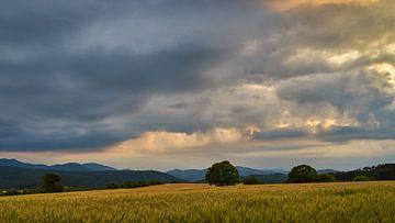 Dramatische hemel boven maïsveld van WittholmPhotography
