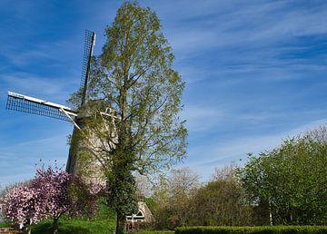 De Wilhelmus Hubertus molen  in de lente van JM de Jong-Jansen