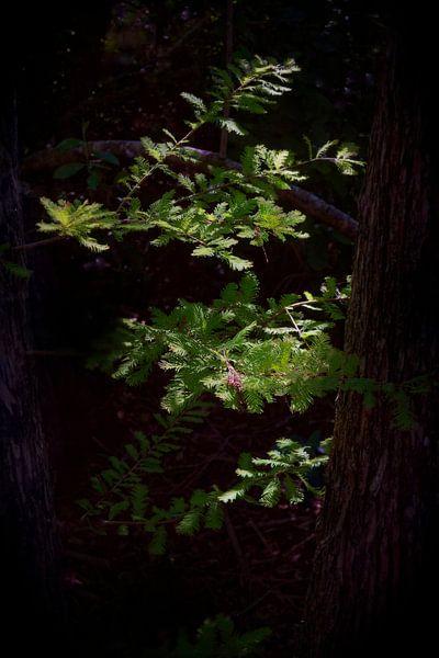 4551-Cypress boomtak van Rudy Umans