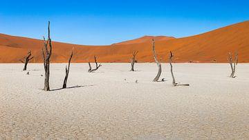 Panorma van Dodevlei in Namibië
