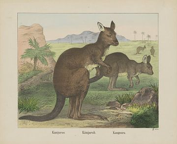 Kangoeroe, Firma Joseph Scholz, 1829 - 1880