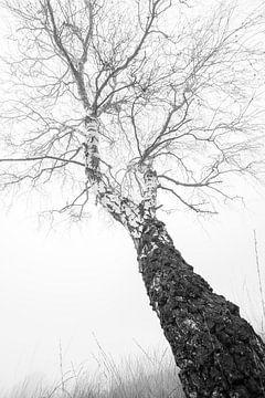 De berk in mist van Danny Slijfer Natuurfotografie