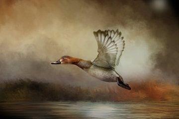 Fliegende Ente über Wasser in der Herbstlandschaft von Diana van Tankeren