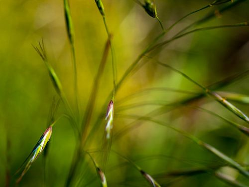 Gras van Anouschka Hendriks