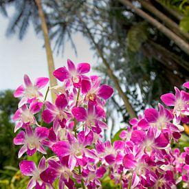 Orchideentuin in Singapore van Arie Storm