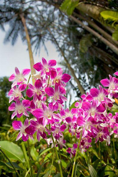 Orchideentuin in Singapore von Arie Storm