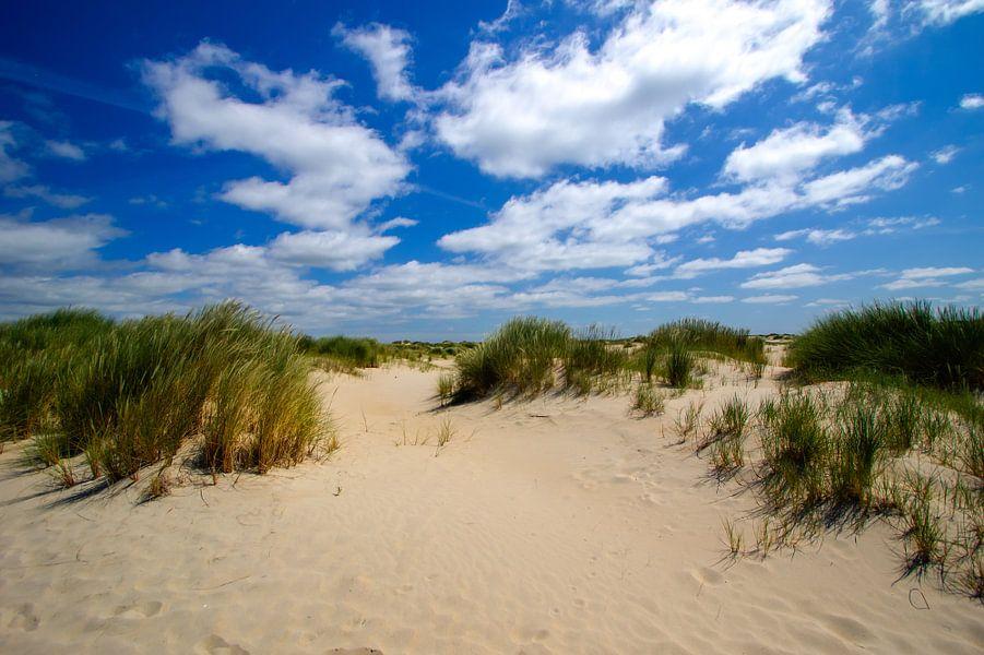 Duinen op Texel (De Hors) van Patrick van Oostrom