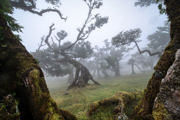 Het spookbos.... van Peter Korevaar