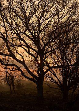 Baum im Abendlicht von Caroline de Brouwer