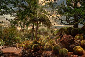 Jungle van Cactussen van Dennis Schaefer