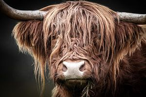 Schottischer Highlander von Mark van der Walle