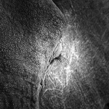 Close-up van oog van Olifant van Frans Lemmens