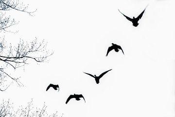 Birds van Roland de Zeeuw fotografie