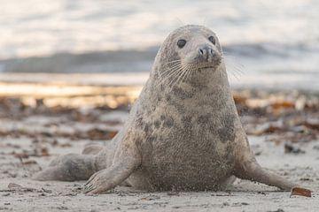 Mom is on the beach van Desirée Couwenberg
