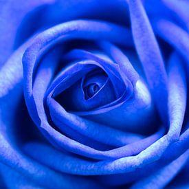 Blauwe roos. van Lorena Cirstea