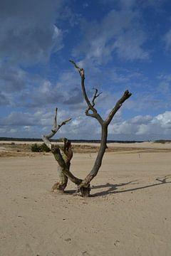 Boom in het zand van de Loonse en Drunense duinen in Brabant van tiny brok