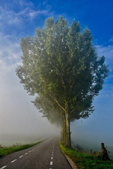 Natuur foto's