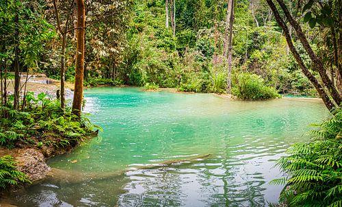 Waterbassin bij de Kuang Si waterval, Laos