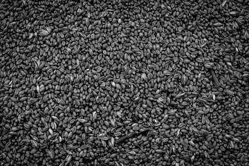 Grain sur Dave Bijl