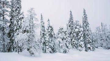 Kiefernwald im Schnee, Finnland von Rietje Bulthuis