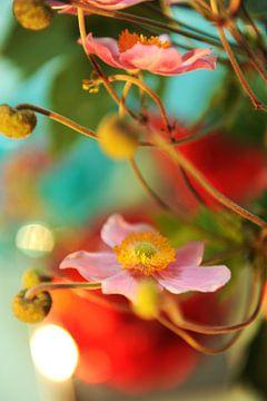 Japanse anemoon bloemen van Mariska van Vondelen