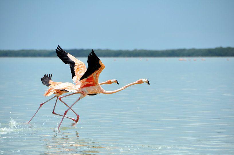 Flamingo's van Marjon Grendel