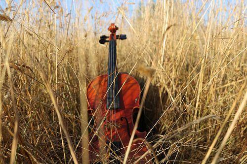 viool in gras van