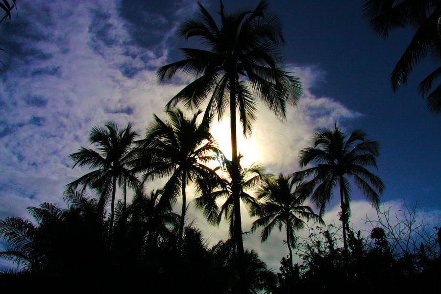 Palmbomen in Brazilië  van Loraine van der Sande