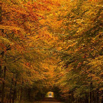 Herfst van Richard Geven