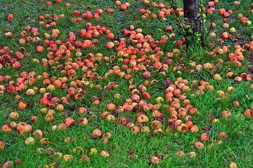 Vallende fruitweide van