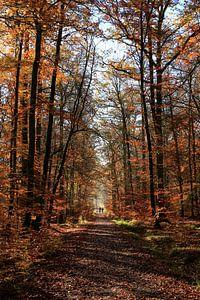 L'automne dans la forêt de Schönbuch sur Tobias Majewski
